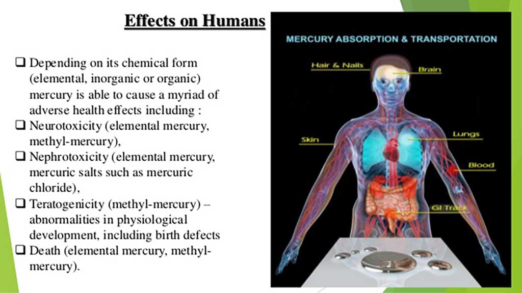 metabolic effects toxic metals