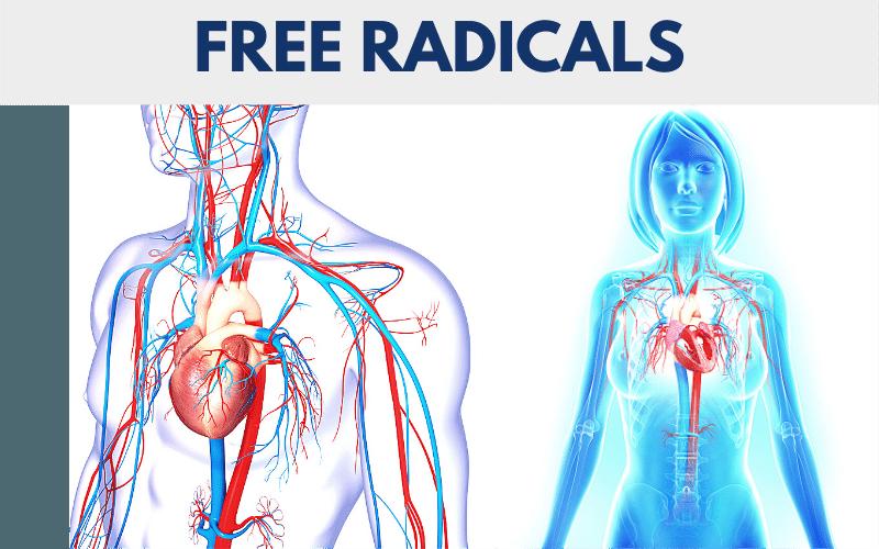 free radicals, edta chelation